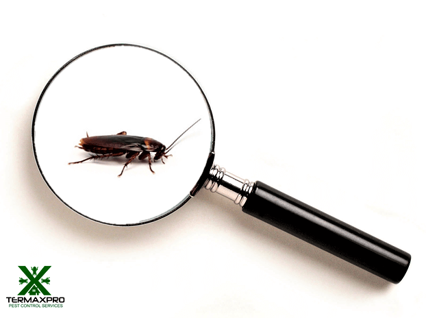 cockroach control philippines